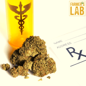 Cannabis Seeds Shipped Directly to Your Door in Searcy, AR. Farmers Lab Seeds is your #1 supplier to growing Cannabis in Searcy, Arkansas.