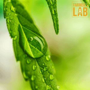 Cannabis Seeds Shipped Directly to Your Door in Talent, OR. Farmers Lab Seeds is your #1 supplier to growing Cannabis in Talent, Oregon.