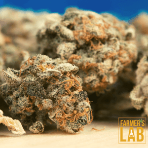 Cannabis Seeds Shipped Directly to Your Door in Tallulah, LA. Farmers Lab Seeds is your #1 supplier to growing Cannabis in Tallulah, Louisiana.