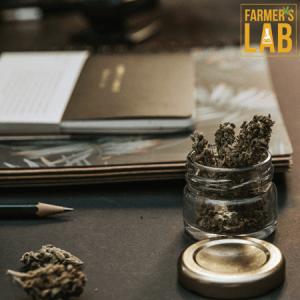 Cannabis Seeds Shipped Directly to Your Door in Webb City, MO. Farmers Lab Seeds is your #1 supplier to growing Cannabis in Webb City, Missouri.