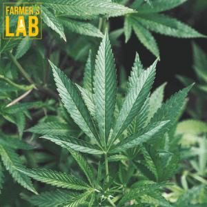 Marijuana Seeds Shipped Directly to Alexandria, VA. Farmers Lab Seeds is your #1 supplier to growing Marijuana in Alexandria, Virginia.