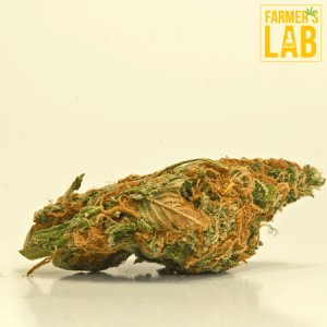 Marijuana Seeds Shipped Directly to Baie-Durfe, QC. Farmers Lab Seeds is your #1 supplier to growing Marijuana in Baie-Durfe, Quebec.