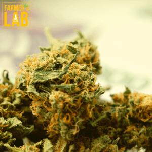 Marijuana Seeds Shipped Directly to Bayonne, NJ. Farmers Lab Seeds is your #1 supplier to growing Marijuana in Bayonne, New Jersey.