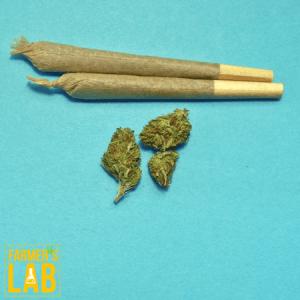 Marijuana Seeds Shipped Directly to Bennington, VT. Farmers Lab Seeds is your #1 supplier to growing Marijuana in Bennington, Vermont.