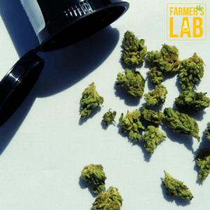 Marijuana Seeds Shipped Directly to Bradenton, FL. Farmers Lab Seeds is your #1 supplier to growing Marijuana in Bradenton, Florida.