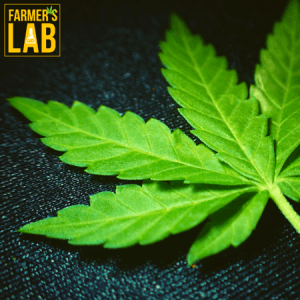 Marijuana Seeds Shipped Directly to Bridge City, LA. Farmers Lab Seeds is your #1 supplier to growing Marijuana in Bridge City, Louisiana.
