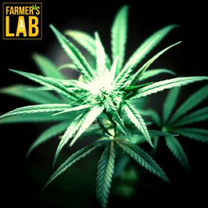 Marijuana Seeds Shipped Directly to Bridgeport, WV. Farmers Lab Seeds is your #1 supplier to growing Marijuana in Bridgeport, West Virginia.