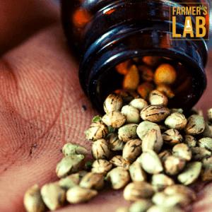 Marijuana Seeds Shipped Directly to Brighton, MI. Farmers Lab Seeds is your #1 supplier to growing Marijuana in Brighton, Michigan.