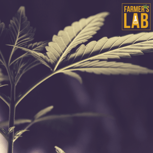 Marijuana Seeds Shipped Directly to Your Door. Farmers Lab Seeds is your #1 supplier to growing Marijuana in California.