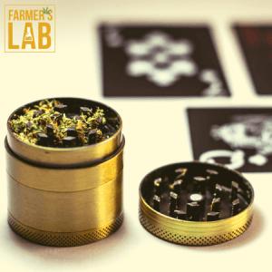 Marijuana Seeds Shipped Directly to Camano, WA. Farmers Lab Seeds is your #1 supplier to growing Marijuana in Camano, Washington.