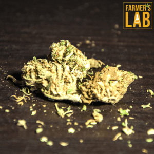 Marijuana Seeds Shipped Directly to Chandler, QC. Farmers Lab Seeds is your #1 supplier to growing Marijuana in Chandler, Quebec.