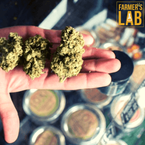 Marijuana Seeds Shipped Directly to Clermont, QC. Farmers Lab Seeds is your #1 supplier to growing Marijuana in Clermont, Quebec.