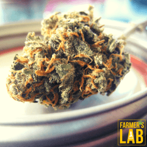 Marijuana Seeds Shipped Directly to Coober Pedy, SA. Farmers Lab Seeds is your #1 supplier to growing Marijuana in Coober Pedy, South Australia.