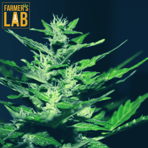 Marijuana Seeds Shipped Directly to Crockett, TX. Farmers Lab Seeds is your #1 supplier to growing Marijuana in Crockett, Texas.