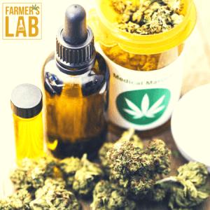 Marijuana Seeds Shipped Directly to Cygnet, TAS. Farmers Lab Seeds is your #1 supplier to growing Marijuana in Cygnet, Tasmania.