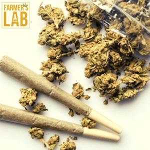 Marijuana Seeds Shipped Directly to Eloy, AZ. Farmers Lab Seeds is your #1 supplier to growing Marijuana in Eloy, Arizona.