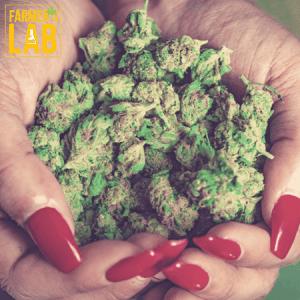 Marijuana Seeds Shipped Directly to Estevan, SK. Farmers Lab Seeds is your #1 supplier to growing Marijuana in Estevan, Saskatchewan.