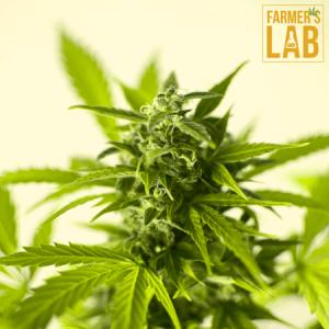 Marijuana Seeds Shipped Directly to Girard, OH. Farmers Lab Seeds is your #1 supplier to growing Marijuana in Girard, Ohio.