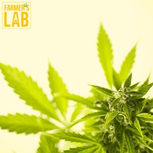 Marijuana Seeds Shipped Directly to Grand Island, NE. Farmers Lab Seeds is your #1 supplier to growing Marijuana in Grand Island, Nebraska.