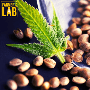 Marijuana Seeds Shipped Directly to Hattiesburg, MS. Farmers Lab Seeds is your #1 supplier to growing Marijuana in Hattiesburg, Mississippi.