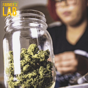 Marijuana Seeds Shipped Directly to Humboldt, SK. Farmers Lab Seeds is your #1 supplier to growing Marijuana in Humboldt, Saskatchewan.