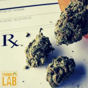 Marijuana Seeds Shipped Directly to Kaysville, UT. Farmers Lab Seeds is your #1 supplier to growing Marijuana in Kaysville, Utah.