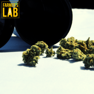 Marijuana Seeds Shipped Directly to La Malbaie, QC. Farmers Lab Seeds is your #1 supplier to growing Marijuana in La Malbaie, Quebec.