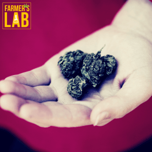 Marijuana Seeds Shipped Directly to La Prairie, QC. Farmers Lab Seeds is your #1 supplier to growing Marijuana in La Prairie, Quebec.
