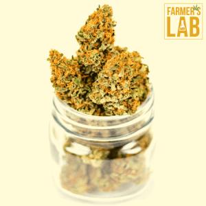 Marijuana Seeds Shipped Directly to Lansdowne, PA. Farmers Lab Seeds is your #1 supplier to growing Marijuana in Lansdowne, Pennsylvania.