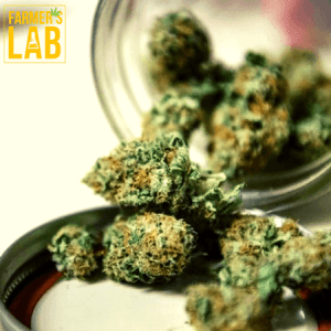 Marijuana Seeds Shipped Directly to Las Vegas, NV. Farmers Lab Seeds is your #1 supplier to growing Marijuana in Las Vegas, Nevada.