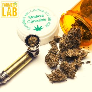 Marijuana Seeds Shipped Directly to Lathrop, CA. Farmers Lab Seeds is your #1 supplier to growing Marijuana in Lathrop, California.