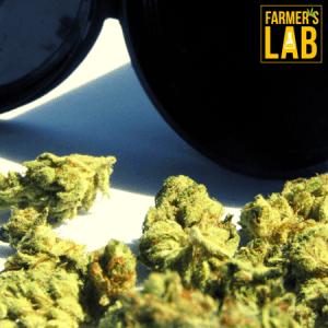 Marijuana Seeds Shipped Directly to Lebanon, PA. Farmers Lab Seeds is your #1 supplier to growing Marijuana in Lebanon, Pennsylvania.
