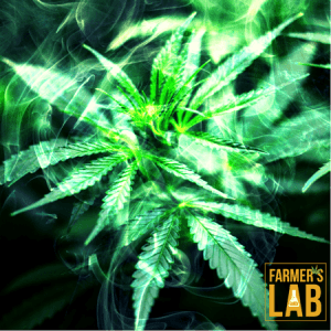 Marijuana Seeds Shipped Directly to Your Door. Farmers Lab Seeds is your #1 supplier to growing Marijuana in Ohio.