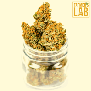 Marijuana Seeds Shipped Directly to Your Door. Farmers Lab Seeds is your #1 supplier to growing Marijuana in Ontario.