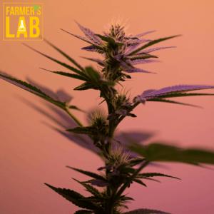 Marijuana Seeds Shipped Directly to Pontiac, IL. Farmers Lab Seeds is your #1 supplier to growing Marijuana in Pontiac, Illinois.