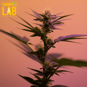 Marijuana Seeds Shipped Directly to Prince George, BC. Farmers Lab Seeds is your #1 supplier to growing Marijuana in Prince George, British Columbia.