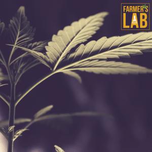 Marijuana Seeds Shipped Directly to Rockhampton, QLD. Farmers Lab Seeds is your #1 supplier to growing Marijuana in Rockhampton, Queensland.
