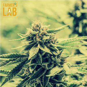 Marijuana Seeds Shipped Directly to Saint John, NB. Farmers Lab Seeds is your #1 supplier to growing Marijuana in Saint John, New Brunswick.