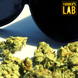Marijuana Seeds Shipped Directly to Saint-Tite, QC. Farmers Lab Seeds is your #1 supplier to growing Marijuana in Saint-Tite, Quebec.