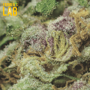 Marijuana Seeds Shipped Directly to Sainte-Anne-des-Plaines, QC. Farmers Lab Seeds is your #1 supplier to growing Marijuana in Sainte-Anne-des-Plaines, Quebec.