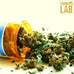 Marijuana Seeds Shipped Directly to Sarasota, FL. Farmers Lab Seeds is your #1 supplier to growing Marijuana in Sarasota, Florida.