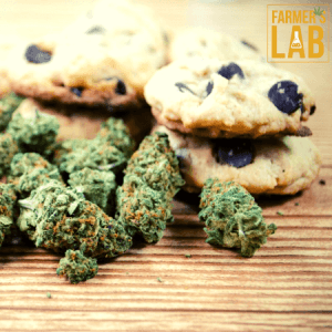 Marijuana Seeds Shipped Directly to Tallahassee, FL. Farmers Lab Seeds is your #1 supplier to growing Marijuana in Tallahassee, Florida.