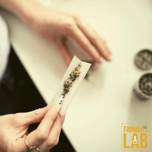 Marijuana Seeds Shipped Directly to Thomson, GA. Farmers Lab Seeds is your #1 supplier to growing Marijuana in Thomson, Georgia.