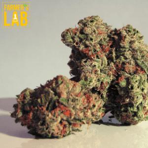 Marijuana Seeds Shipped Directly to Vandalia, OH. Farmers Lab Seeds is your #1 supplier to growing Marijuana in Vandalia, Ohio.