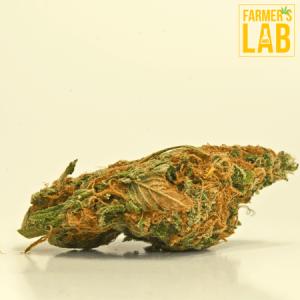Marijuana Seeds Shipped Directly to Walker, LA. Farmers Lab Seeds is your #1 supplier to growing Marijuana in Walker, Louisiana.
