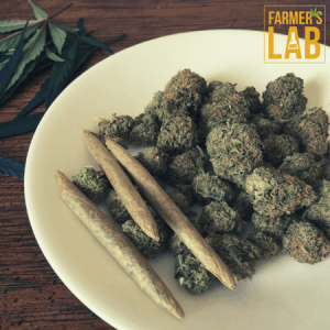 Marijuana Seeds Shipped Directly to Waterloo, ON. Farmers Lab Seeds is your #1 supplier to growing Marijuana in Waterloo, Ontario.