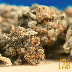 Marijuana Seeds Shipped Directly to Waynesville, NC. Farmers Lab Seeds is your #1 supplier to growing Marijuana in Waynesville, North Carolina.