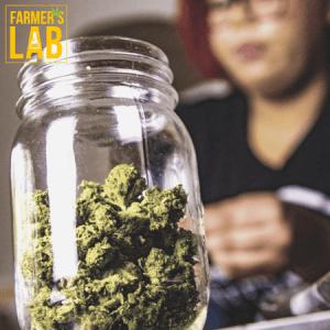 Marijuana Seeds Shipped Directly to Wetaskiwin, AB. Farmers Lab Seeds is your #1 supplier to growing Marijuana in Wetaskiwin, Alberta.