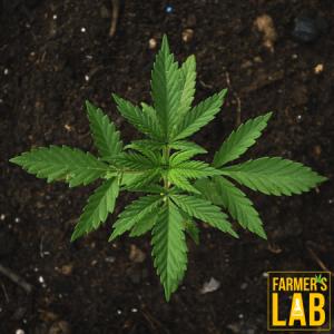 Marijuana Seeds Shipped Directly to Wildwood, FL. Farmers Lab Seeds is your #1 supplier to growing Marijuana in Wildwood, Florida.