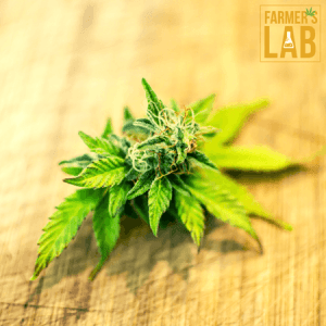 Marijuana Seeds Shipped Directly to Your Door. Farmers Lab Seeds is your #1 supplier to growing Marijuana in Wisconsin.